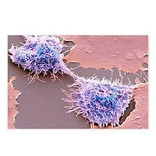 Dividing HeLa cells, SEM Postcards (Package of 8)