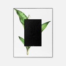 Lily of the valley, artwork Picture Frame