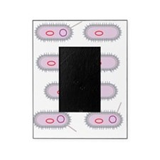 Bacterial conjugation, artwork Picture Frame
