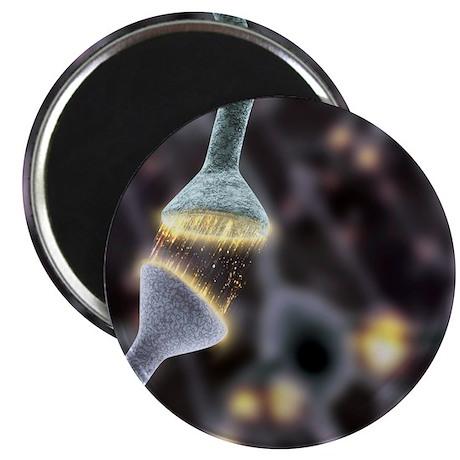 Nerve synapse, artwork Magnet