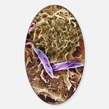 Macrophage attacking a foreign body Sticker (Oval)