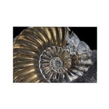 Pyritised Ammonite Fossil Rectangle Magnet
