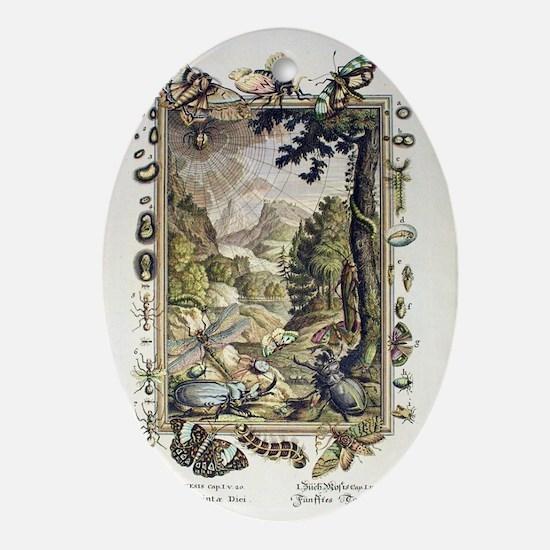 1731 Johann Scheuchzer Creation 5/6t Oval Ornament
