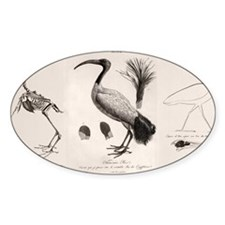 1812 Egyptian Ibis Decal