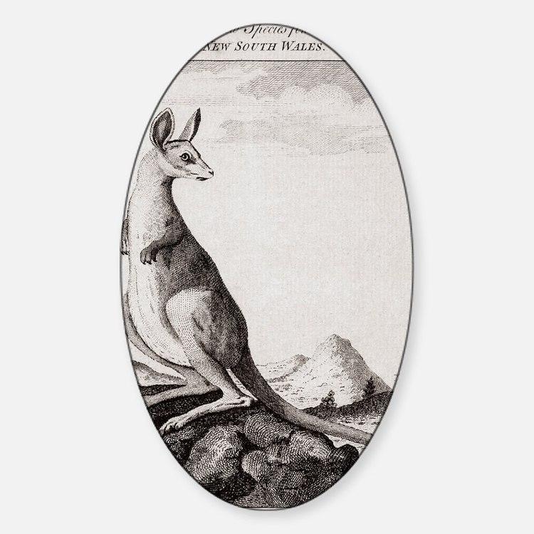 18th century engraving of a kangaro Decal