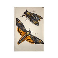 1744 Death's head hawkmoth by Ros Rectangle Magnet