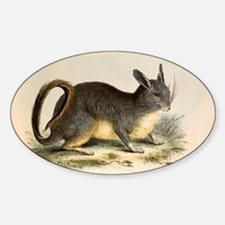 1835 Viscacha from mountains of Chi Sticker (Oval)