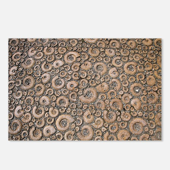 Ammonite paving stones Postcards (Package of 8)