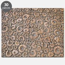 Ammonite paving stones Puzzle