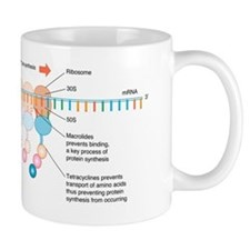 Antibiotic mechanism of action, artwork Mug