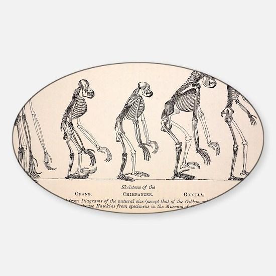 1863 Huxley from Ape to Man evoluti Sticker (Oval)