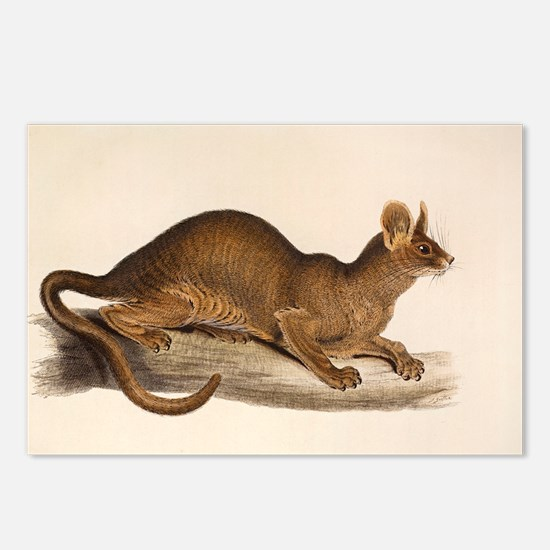 1835 Fossa Crytoprocta by Postcards (Package of 8)