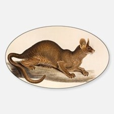 1835 Fossa Crytoprocta by Edward Le Sticker (Oval)
