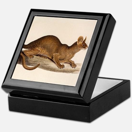 1835 Fossa Crytoprocta by Edward Lear Keepsake Box