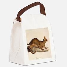 1835 Fossa Crytoprocta by Edward  Canvas Lunch Bag