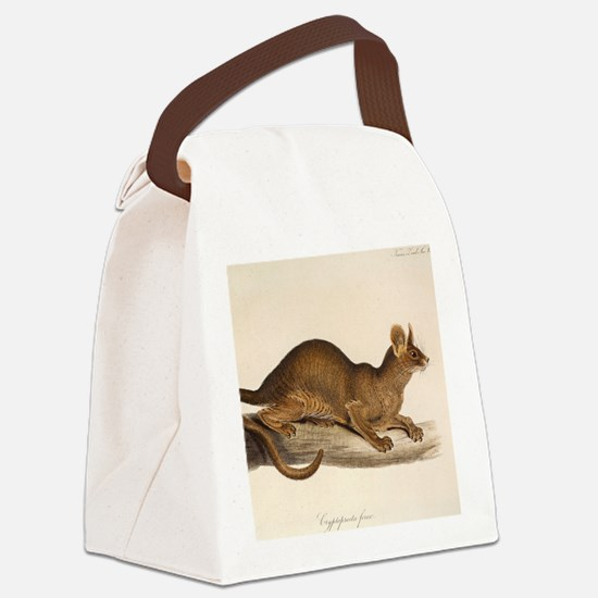 1835 Fossa Crytoprocta by Edward  Canvas Lunch Bag