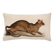 1835 Fossa Crytoprocta by Edward Lear Pillow Case