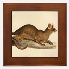 1835 Fossa Crytoprocta by Edward Lear Framed Tile
