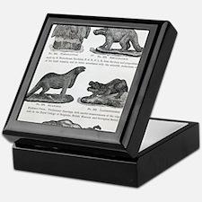 1866 Waterhouse Hawkins' model dinosa Keepsake Box