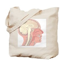 Anatomy of the head, artwork Tote Bag
