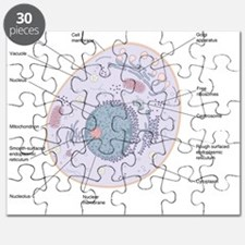 Animal cell structure Puzzle