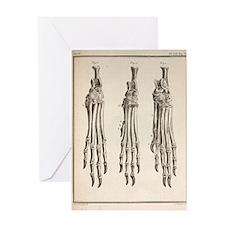 1755 Variation dog feet Buffon evolu Greeting Card