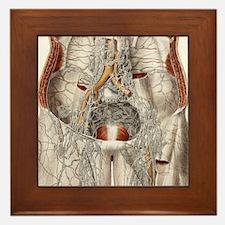 Circulatory system, 19th Century artwo Framed Tile