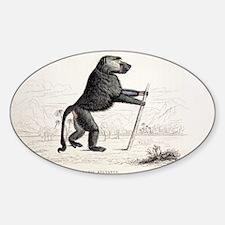 1833 Jardine Papio sylvanus baboon Sticker (Oval)
