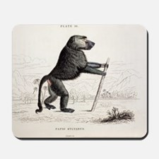 1833 Jardine Papio sylvanus baboon Mousepad