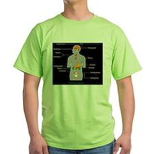 Endocrine system, artwork T-Shirt