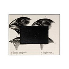 Darwin's Galapagos Finches Picture Frame