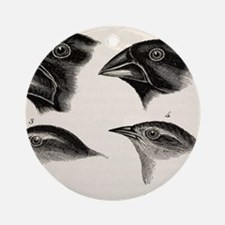 Darwin's Galapagos Finches Round Ornament