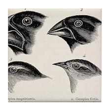 Darwin's Galapagos Finches Tile Coaster