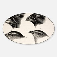 Darwin's Galapagos Finches Sticker (Oval)