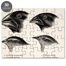Darwin's Galapagos Finches Puzzle