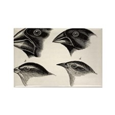 Darwin's Galapagos Finches Rectangle Magnet