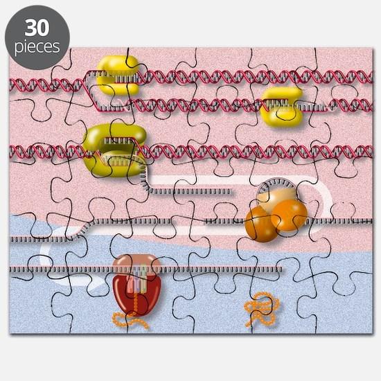 Genetic molecular mechanisms, artwork Puzzle