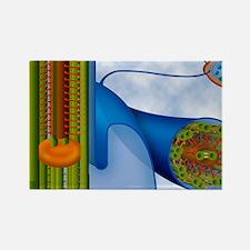 Eukaryotic flagellum structure, a Rectangle Magnet