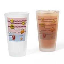 Genetic molecular mechanisms, artwo Drinking Glass