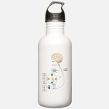 Gate control theory of Water Bottle