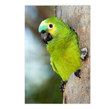 Blue-fronted parrot Postcards (Package of 8)