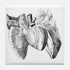 Heart and lung anatomy, 17th century Tile Coaster