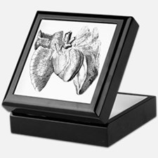 Heart and lung anatomy, 17th century Keepsake Box