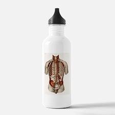 Human arteries, 19th C Water Bottle