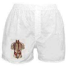 Human arteries, 19th Century illustra Boxer Shorts