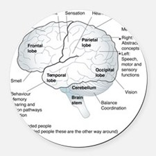 Functional areas of the brain, ar Round Car Magnet