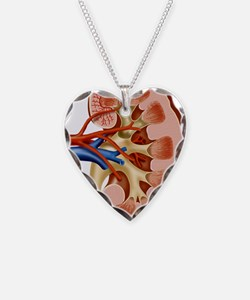 Kidney anatomy, artwork Necklace