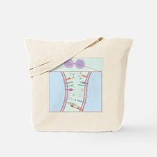 Immune system, artwork Tote Bag