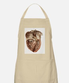 Heart anatomy, 19th Century illustration Apron