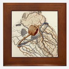 Heart anatomy, 19th Century illustrati Framed Tile